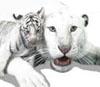 len_tiger userpic