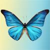 rabidbutterfli userpic