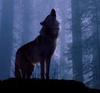 Ash: howl
