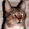 lev_cat
