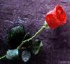 intimentmoments userpic