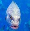 curmudgeonfish userpic