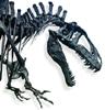 Acrocanthosaurus, Dinosaurs
