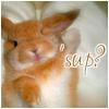 rosequeen userpic