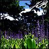 joannablack userpic