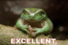 excellent frog