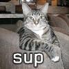 cat sup