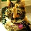 thescottishcat userpic