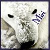 miri polar bear
