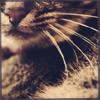 quikslvr userpic
