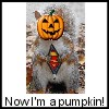 Super Pumpkin Squirrel 2