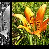 padfoot_tonks userpic