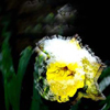 beautiful_freq userpic