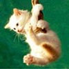 lizmopuddy: Kitten swinging