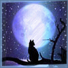 Night, Cat, Moon