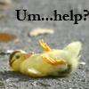 Missing Left Sock Beast [userpic]