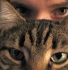 Тагики: cat