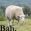 Sheepie: Bah!