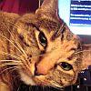 kitten face!