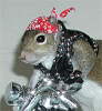 Biker Squirrel