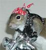 Biker Squirrel