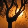 bambuh userpic