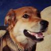 doggenius userpic
