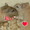 the oncoming whirlwind: gerbil: kiss