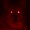 Wolfie Red