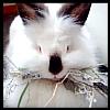 rosie_rules userpic