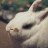 bun_o_rama userpic
