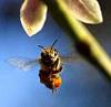 honeybeeline userpic