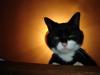 jobseyes userpic
