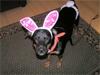 Bunny Bryn