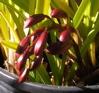 trektone: orchid