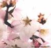 blossomskies
