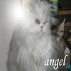kimbacat userpic
