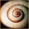 spiral by wizzicons