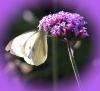 Mlle Elizabeth: butterfly