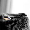 marumba userpic