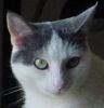 Bill: kitty