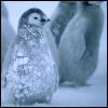 Frosty Penguin