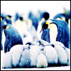 Penguin Flock