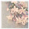 arcticsong userpic