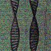 duplicate_helix userpic