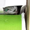 Cat in a Box in a Box