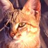 blindtaber userpic