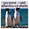 penguins dammit