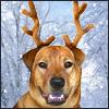 xmas reindeer india