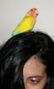 bird on head